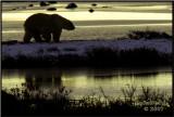 Silhouette polar Bear-Edit.jpg