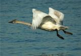 Birds in Motion