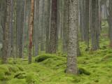 Klippans Nature Reserve
