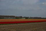 Zuidermiddenweg.jpg