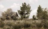 Owens Valley Homestead