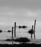Mud Flats, Elkhorn Slough