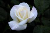 April's Rose