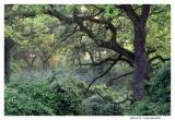 Forêt d'Offendorf