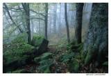 Sous bois  Vosges
