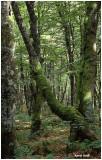 Forêt Haute Vosges