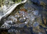 Frozen Pond Bubbles