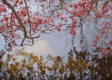 03 Spring Maple Pond