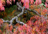 16 Lichen Branch and Flames 2