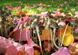 Inside the Mushroom Forest
