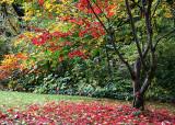 Red, Yellow, Green Garden