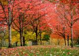 Fall at the Park 7