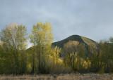 Spring Cottonwoods