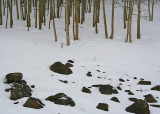 Rocks, Trunks, Snow on Boulder Mountain