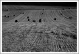 Harvest (5)