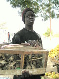 195 Man selling birds near fruit and veg stand.jpg