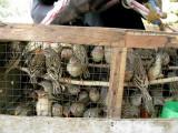 204 Sad birds.jpg