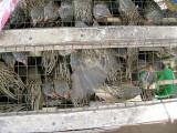205 Sad birds are crowded.jpg