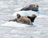 Seal Trio.jpg