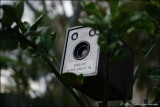 120 Kodak Verichrome Pan roll