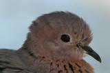 Birds Egypt 2007