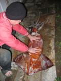 Super-Size Squids In Northern CA Waters - 02/12/10