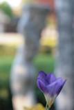 Spring Floral - 04/01/08