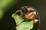 June  Bug 2