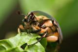 June Bug 3