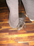 An otter in Tadlo Lodge!