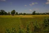 Rice fields, Don Khon - 4000 islands