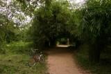 Bamboo tunnel, Don Khon - 4000 islands