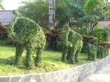 Elephants, Koh Chang (= Elephant Island)