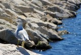 Lazy Sunday afternoon for this seagull, Milwaukee