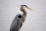 Birds of the Thomas Jefferson Park, Dallas