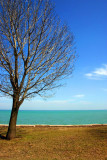 The tree is ready for its leaves, Lake Michigan, Chicago