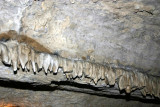 New stalactites - only a few thousand years old,Penn's Caves, PA