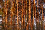 Sun filters through Walnut Springs Park, PA