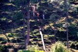 Illegal tree-felling