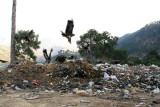 Rubbish in Pallandri