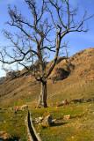 Cymbol tree
