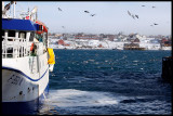 Vadsö harbour with lots of interesting winterbirds
