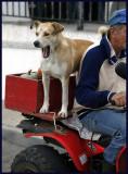 ATV Dog !