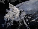 Ice beetle - Notteryd