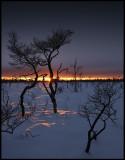 Sunset at Kittlakull - Store Mosse (Bogland National Park in south Sweden)