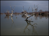 Lake Kerkini on the border to Bulgaria