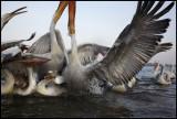 Pelican chaos