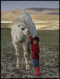 Young boy and his friend dromedar - Sed Wadi Abied