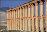 Palmyra pillars