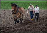 Ploughing with Ardenner horse - Huseby Småland